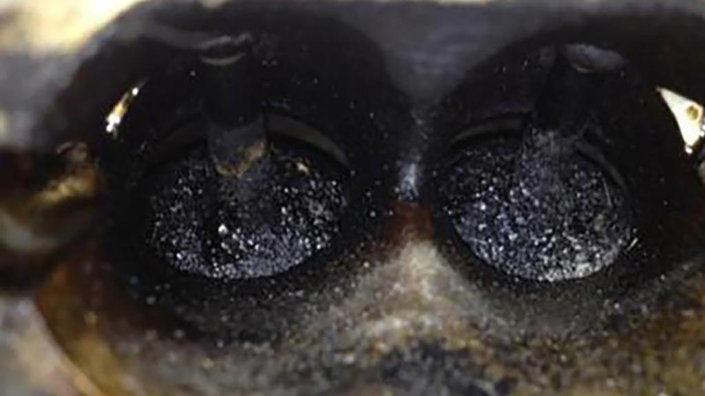 汽车积碳怎么清理